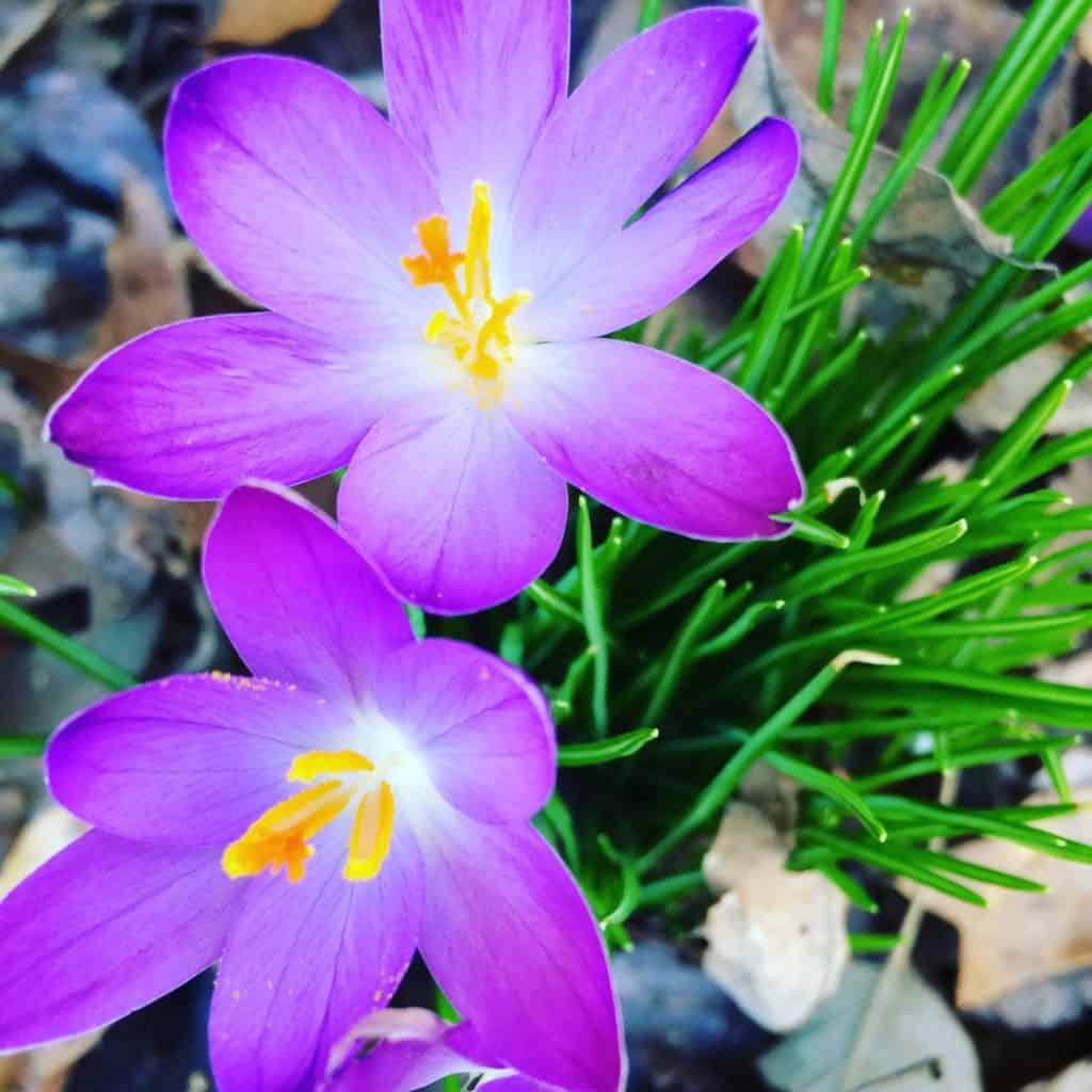 resurrection sunday, hope, life, spring
