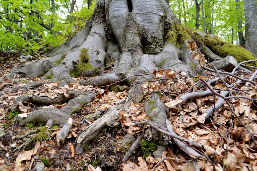 roots, community, friendship