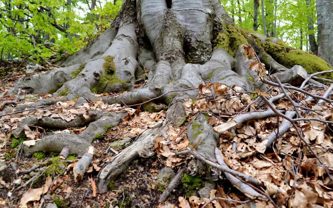 On Cultivating Roots